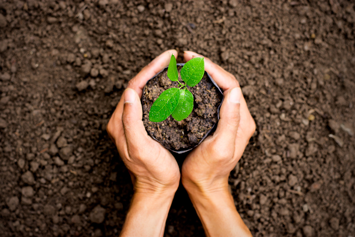 Planting Trees (1)